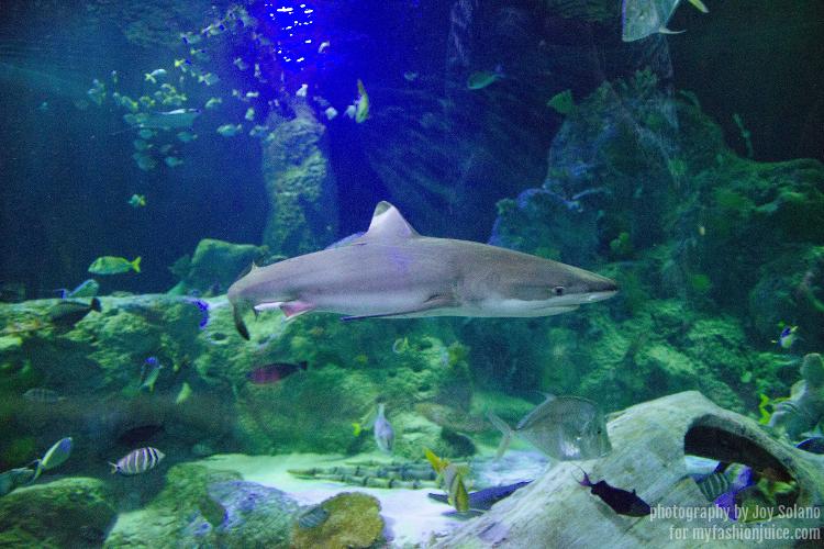 Grapevine Sea Life Aquarium Fun My Fashion Juice