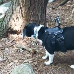 dog, Louis, beagle mix, hiking. GoPro