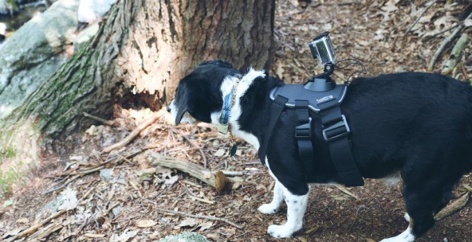 Give a Dog a GoPro, Go Hiking!